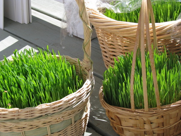 How to Grow a Real Glass Easter Basket